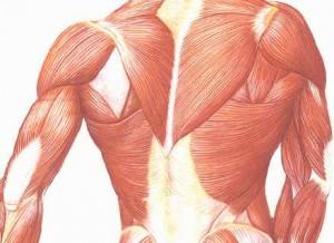 Síntomas de la atrofia muscular