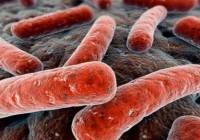 Síntomas del cólera